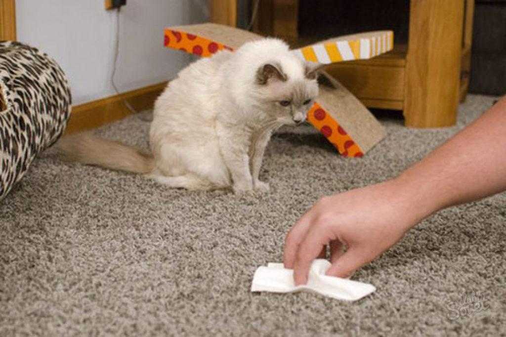 Как избавиться от запахов кошачьей мочи?